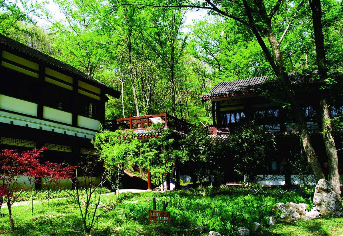 Qianlong Royal Park Cedar City Tree Qixia Mountain