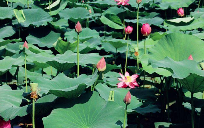 Nanjing Mochou Lake Park