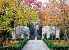 Xiaoling Tomb of Ming Dynasty Nanjing Trip Attraction