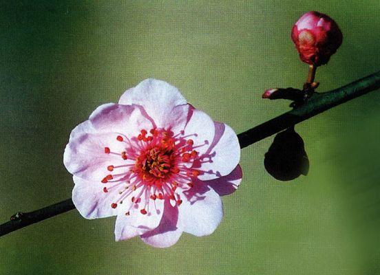 China Nanjing International Plum Blossom Festival