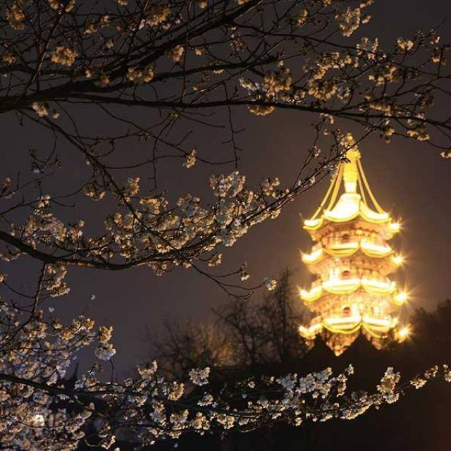 Cherry blossoms in Nanjing Jiming Temple