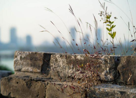 Ming City Wall tours routes nanjing