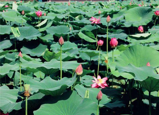 Nanjing Mochou Lake Park Nature